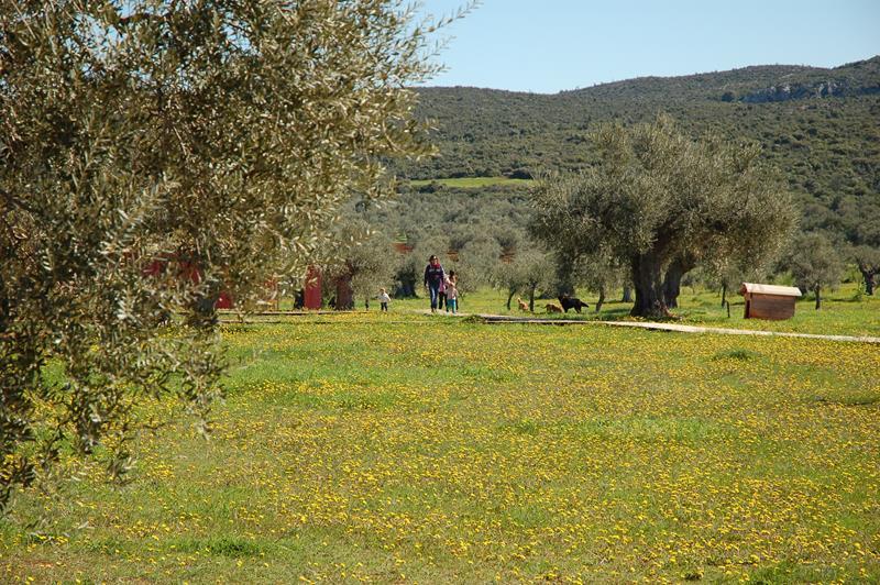 hippesippe__Eumelia__ walking__around__the__farm__Copyright__www.eumelia.com