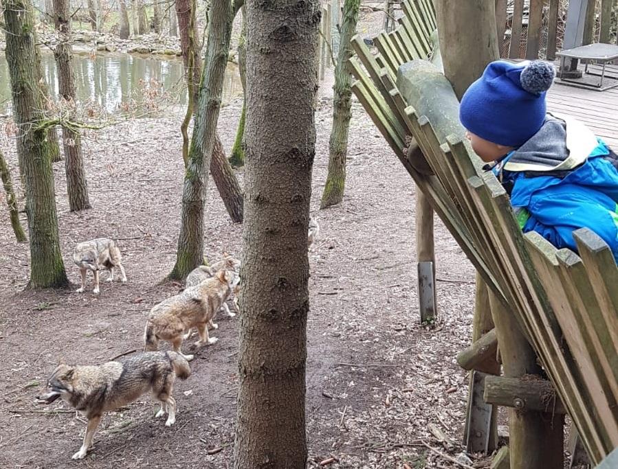 Bei den Wölfen spielen – Ein Besuch im  Wildpark-MV